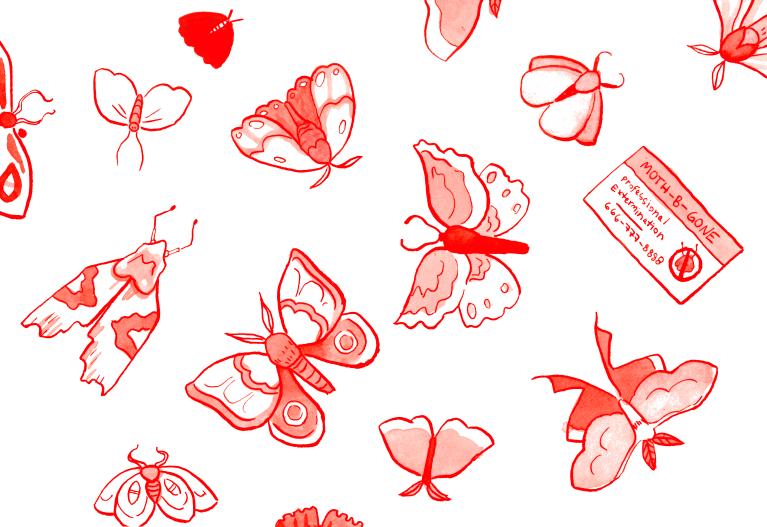 moths_015